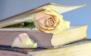 white rose in book